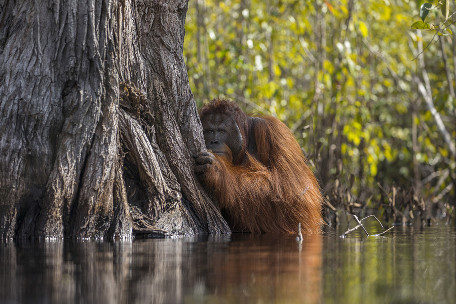 National Geographic Nature Photographer Of The Year Contest - 22 incredible finalists to the worlds largest photography competition