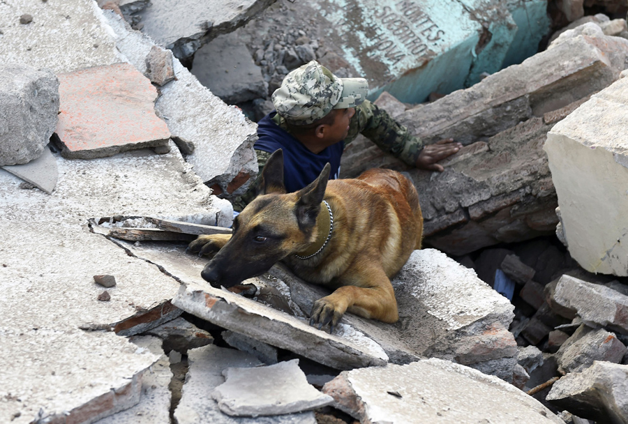 https://cdn.theatlantic.com/assets/media/img/photo/2017/09/mexicos-rescue-dogs/r01_844847500/main_900.jpg?1506273032