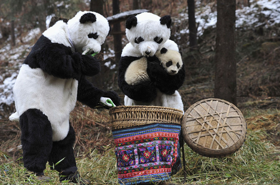The Sichuan Giant Panda Bases and Sanctuaries