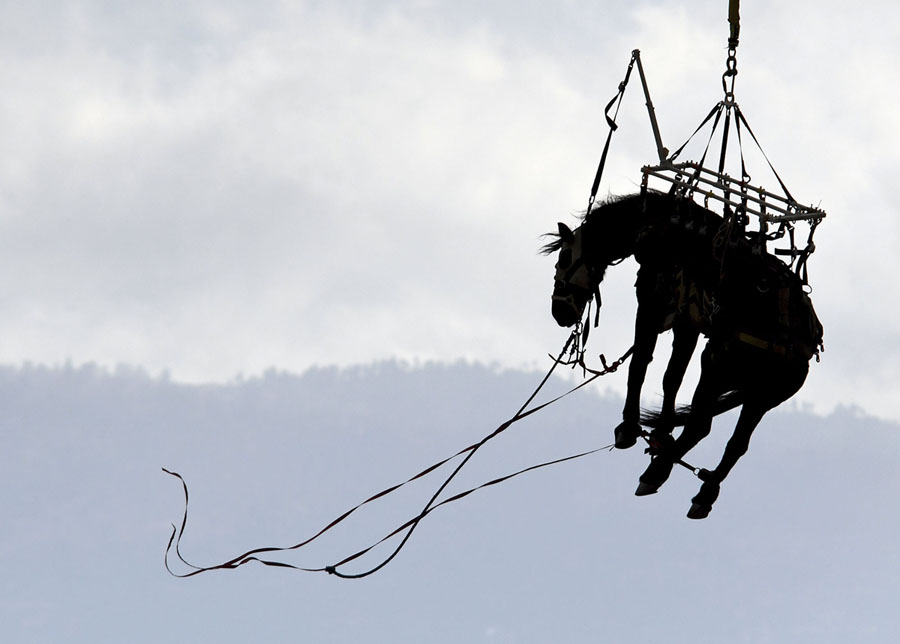 A Los Angeles County Fire Department Helicopter Carries A Horse To Bowen Ranch In Rural Apple Valley California On November