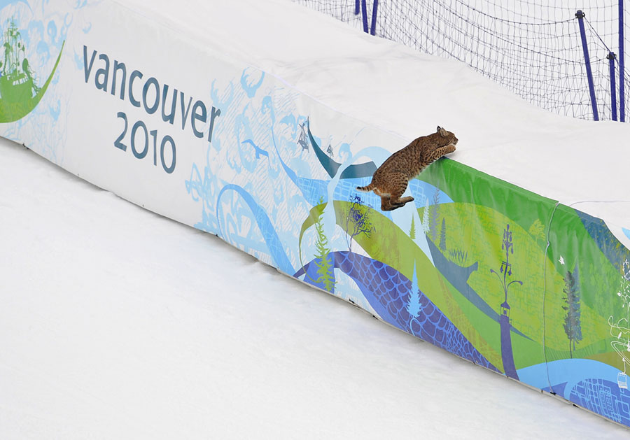 A Lynx that walked onto the course jumps onto the safety fencing near the finish area during first training for the Men's Downhill at the Vancouver 2010 Olympics in Whistler, British Columbia, on February 10, 2010. # Gero Breloer / AP