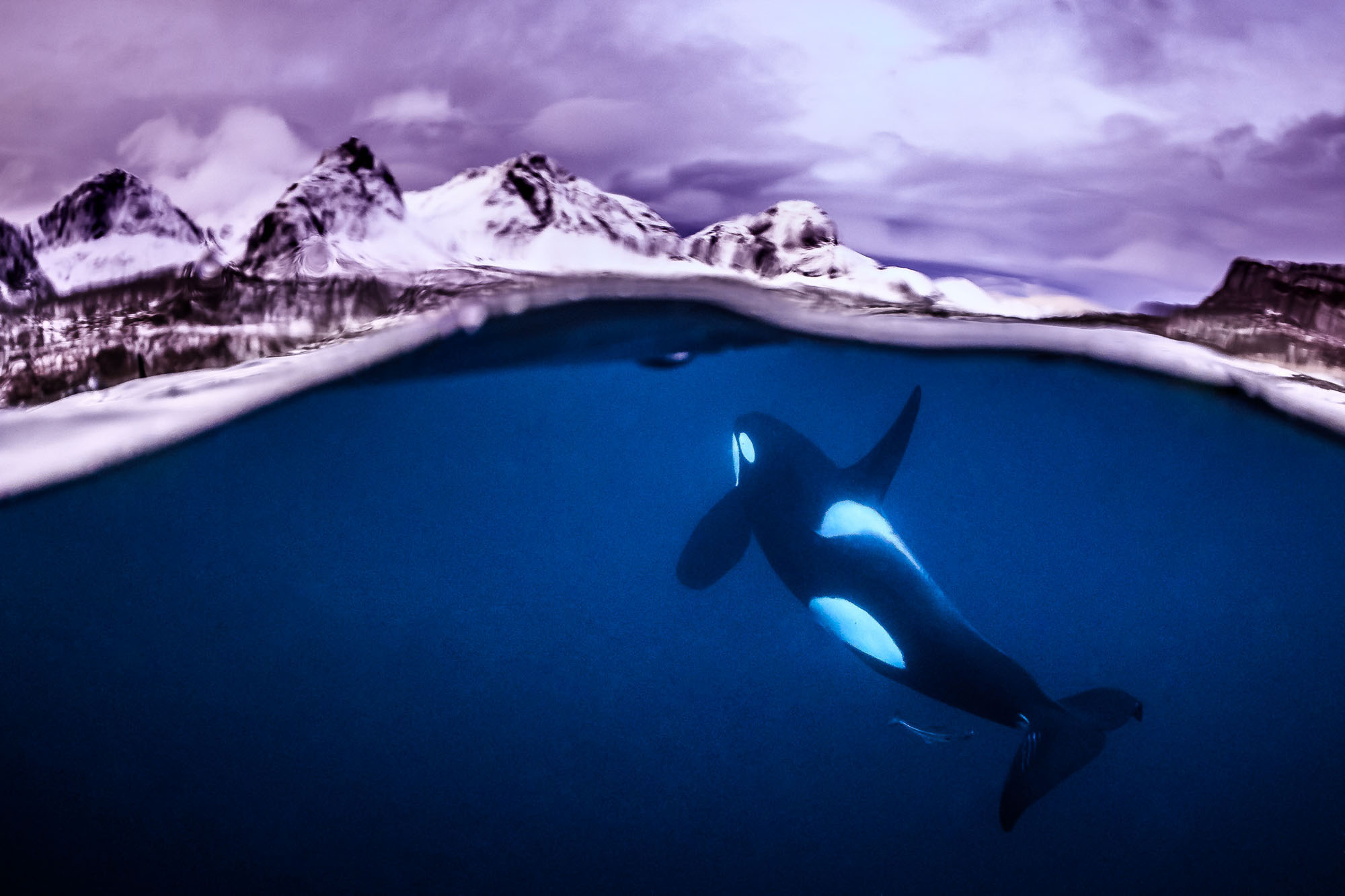 Winners Of The 2018 Underwater Photographer Of The Year Contest
