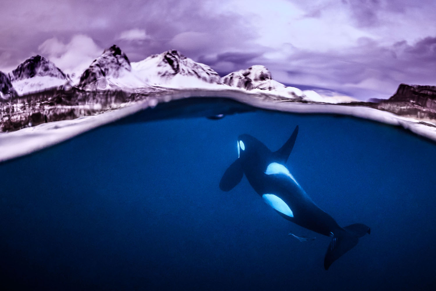 All the winners and the best works of the Focus on Nature photo contest