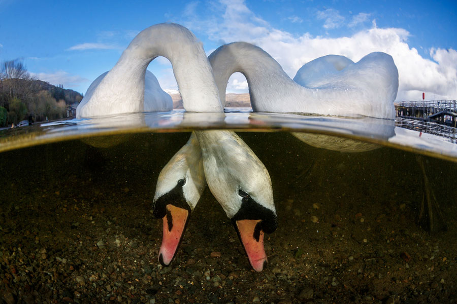 Winners of the 2018 Underwater Photographer of the Year
