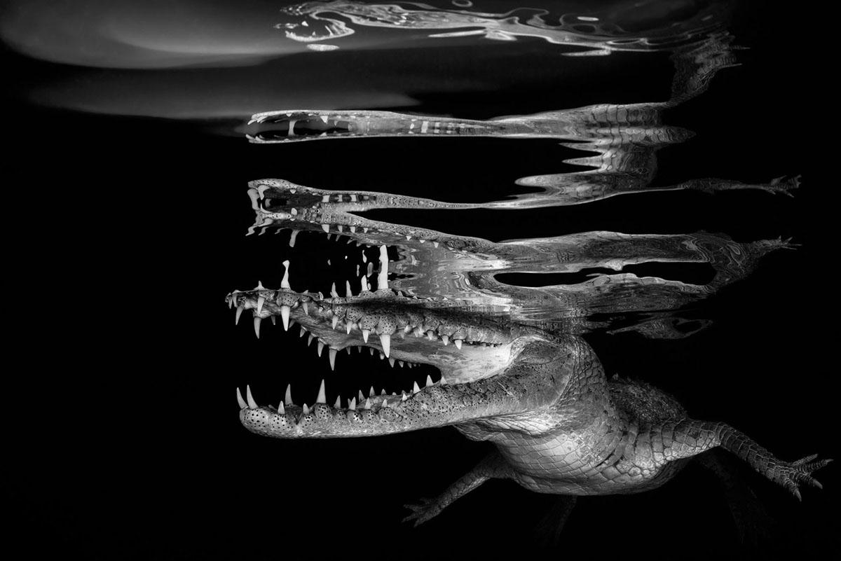 Crocodile ReflectionsBorut Furlan