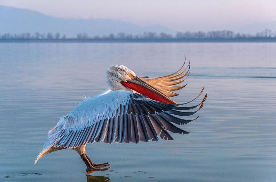2018 Audubon Photography Awards - The Atlantic