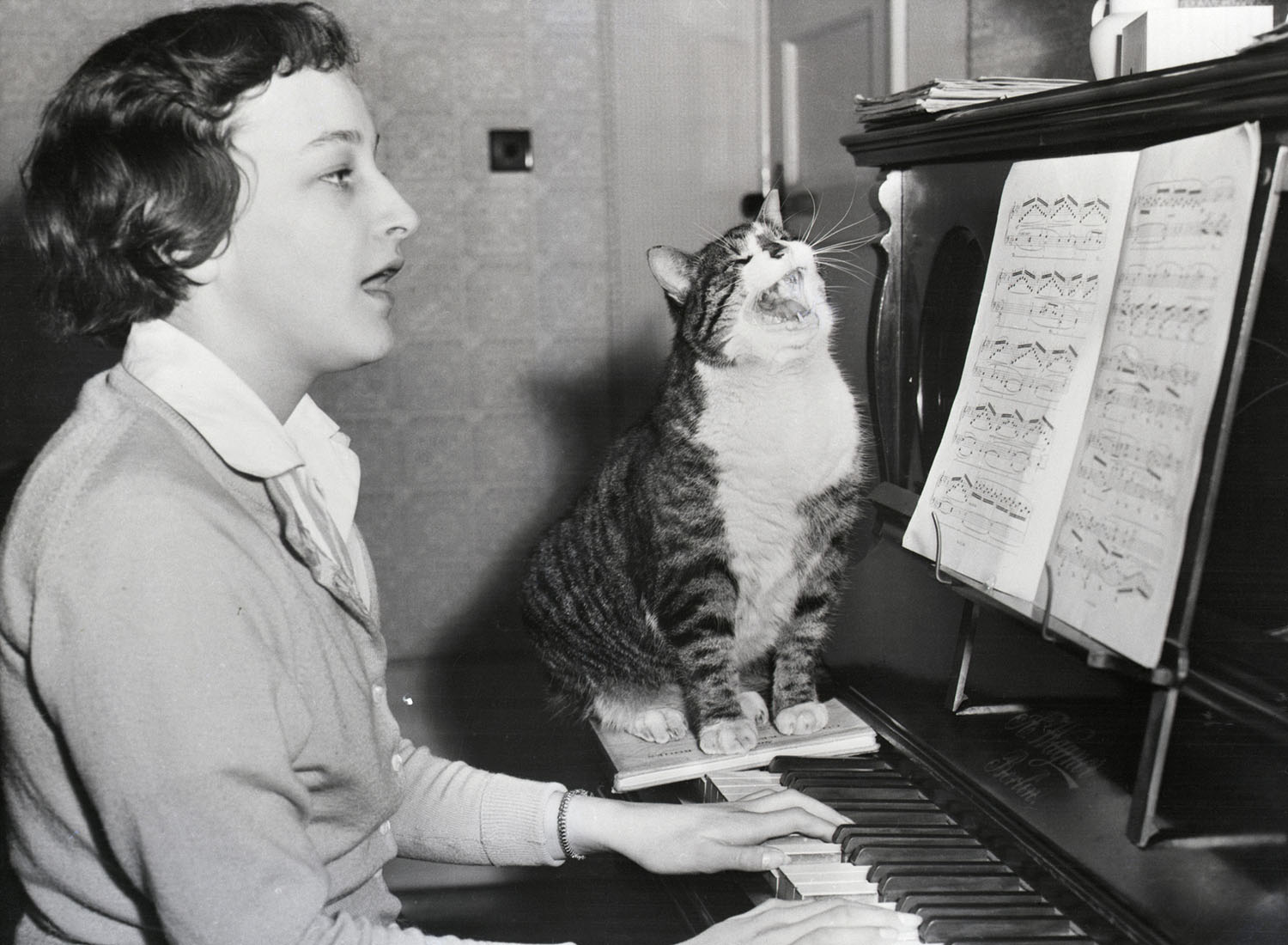 Historical Photos of Cats