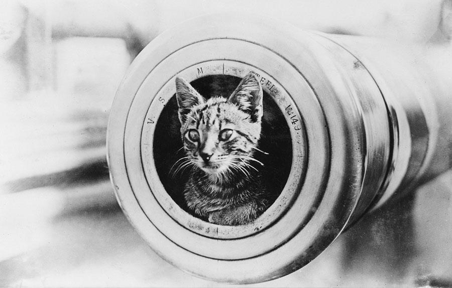 historic cat photos on international cat day the atlantic