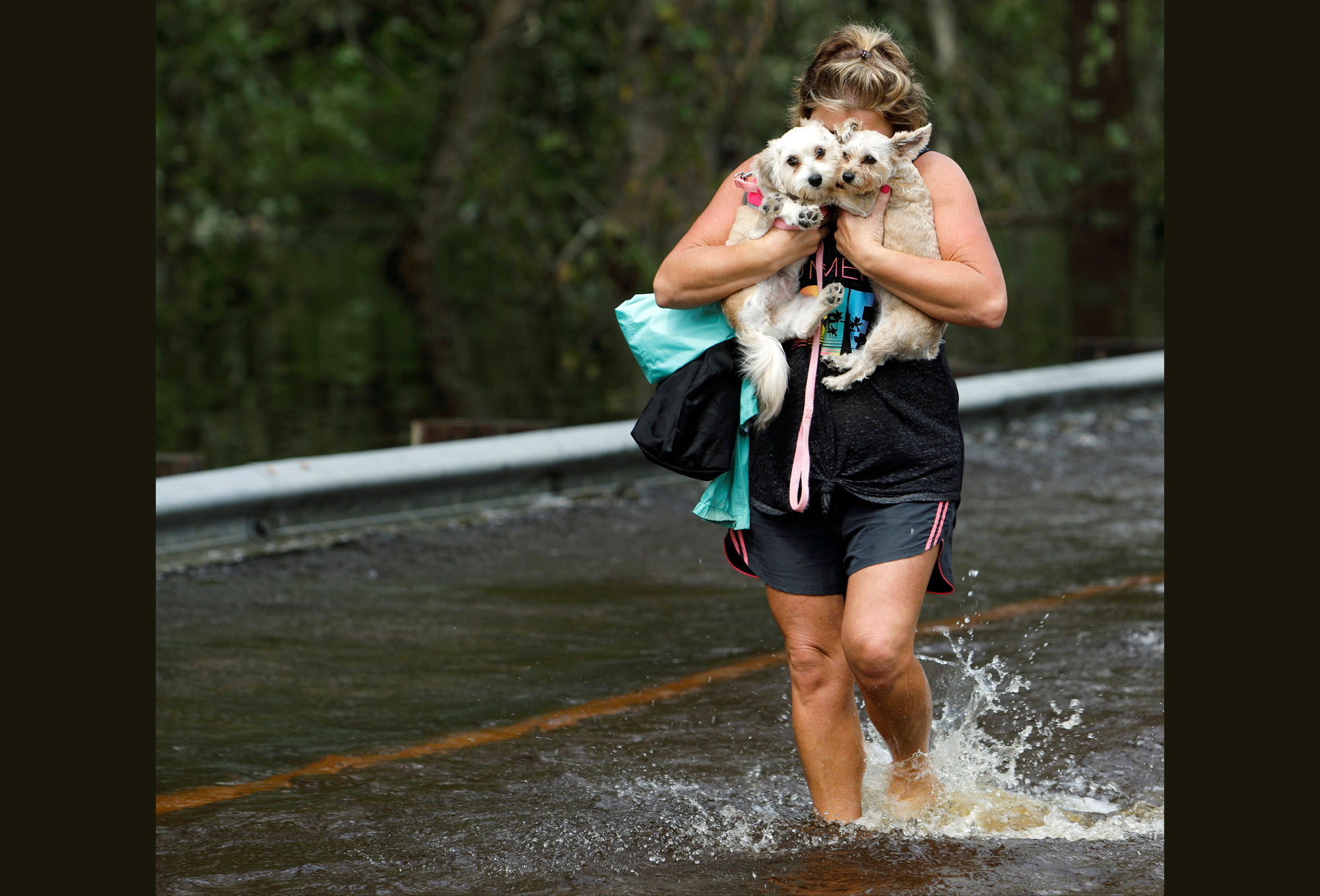 Hurricane Florence: Pet Rescues in Photos - The Atlantic