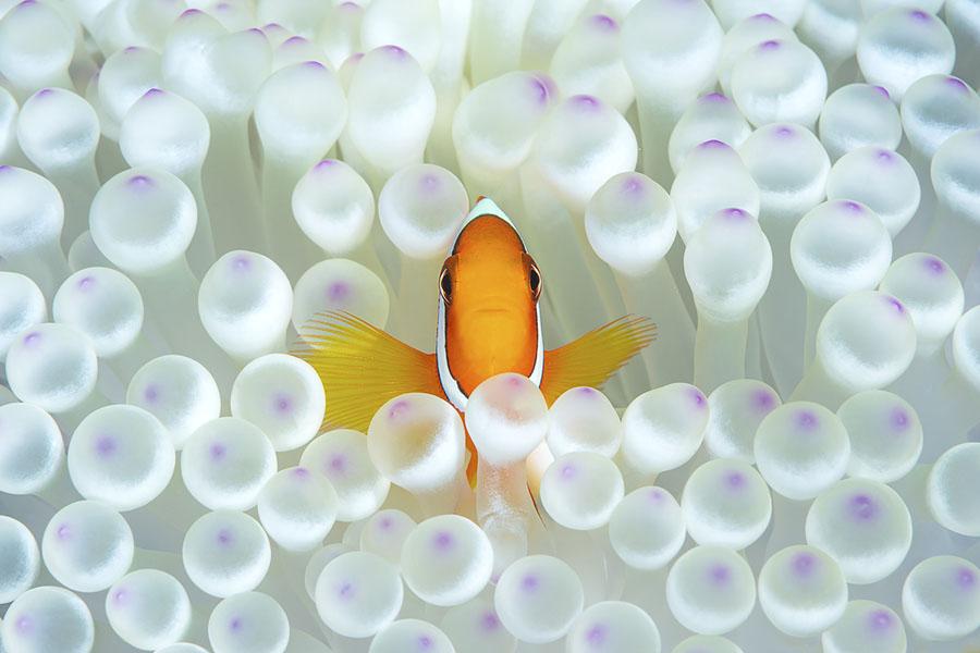 Winners of the 2018 Ocean Art Underwater Photo Contest - The