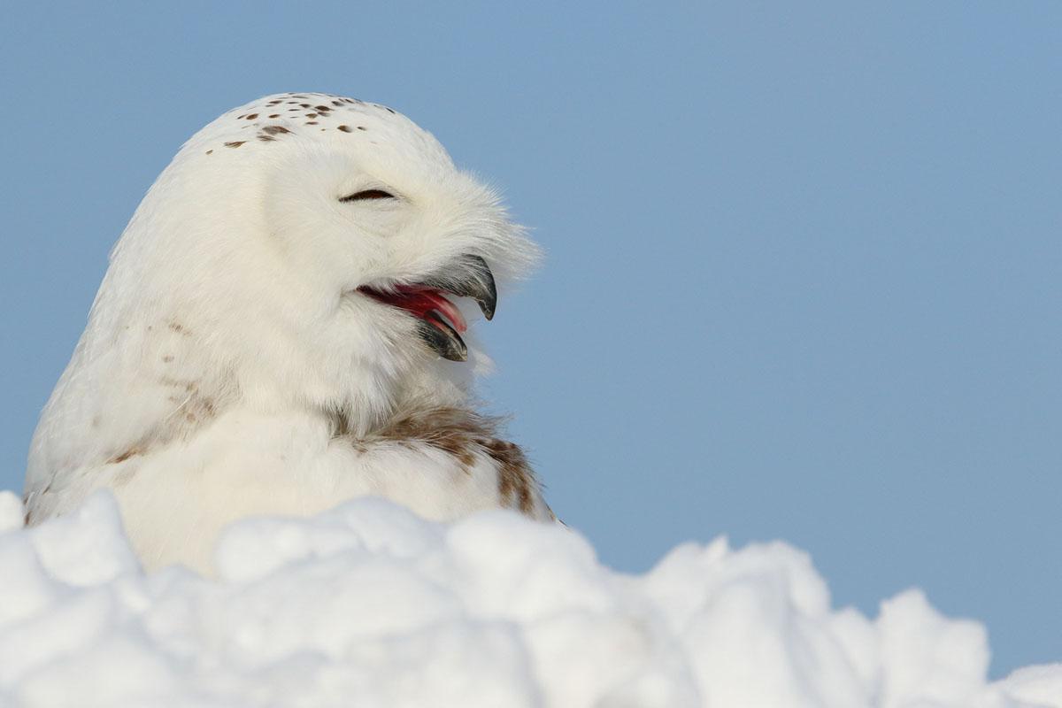 Superb Owl Sunday III (28 photos)