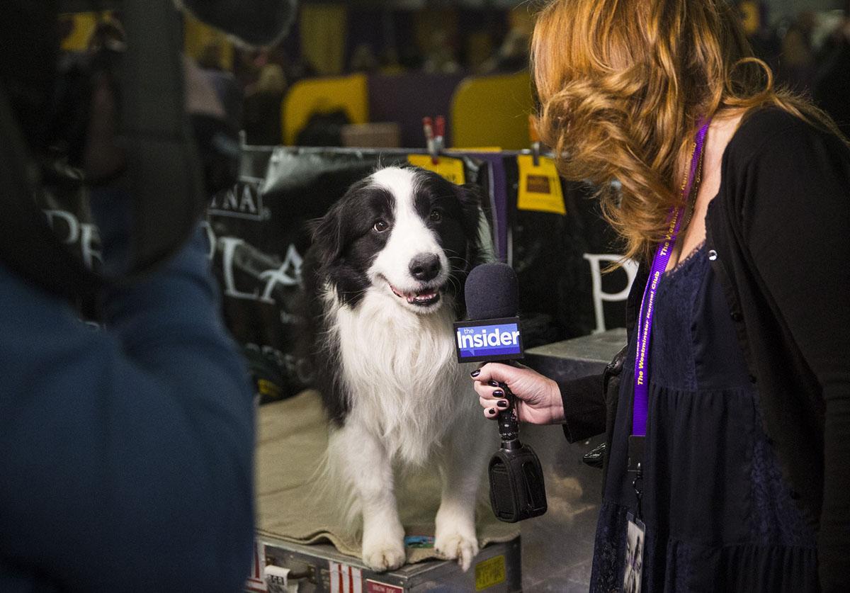 Soundbites: Dogs on the Microphone (18 photos)
