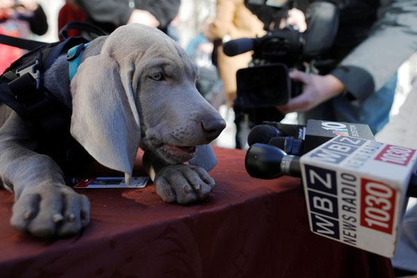 """Khi những chú chó được """"lên sóng"""" toàn thế giới"""