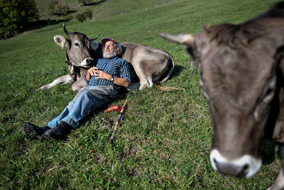 Additional Cows (25 photos)
