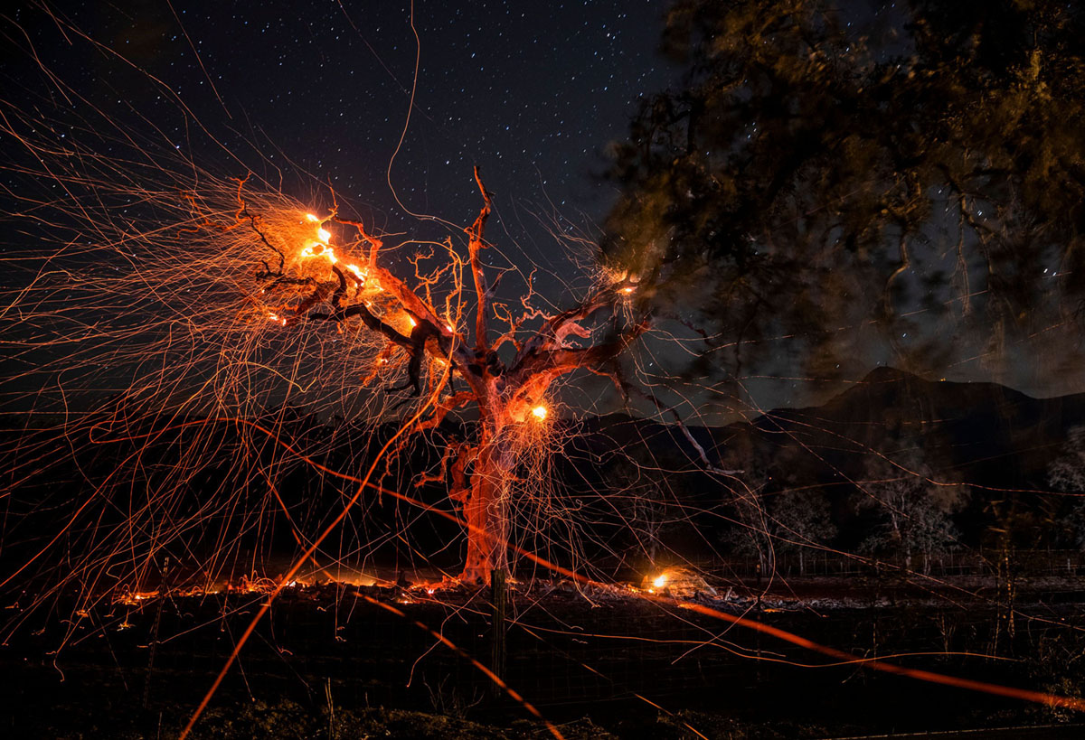 Embers Fly in California's Wind-Driven Wildfires (26 photos)