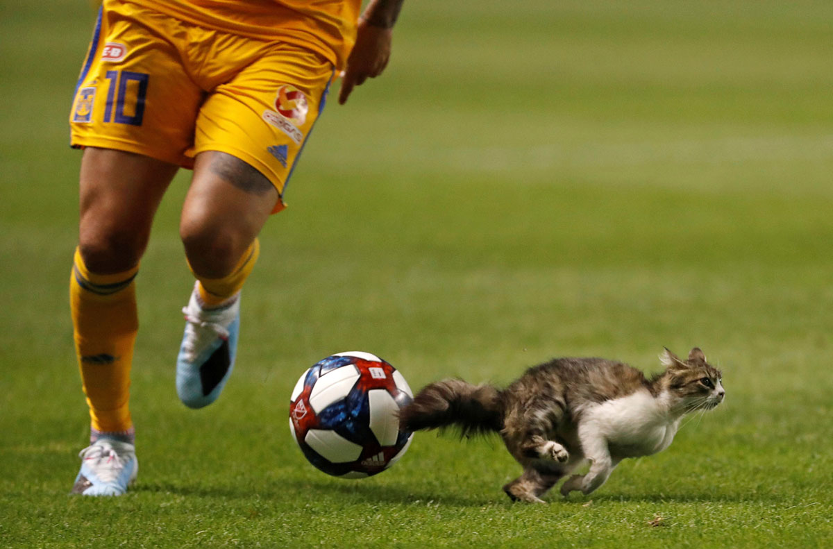 Animals on the Playing Field (28 photos)