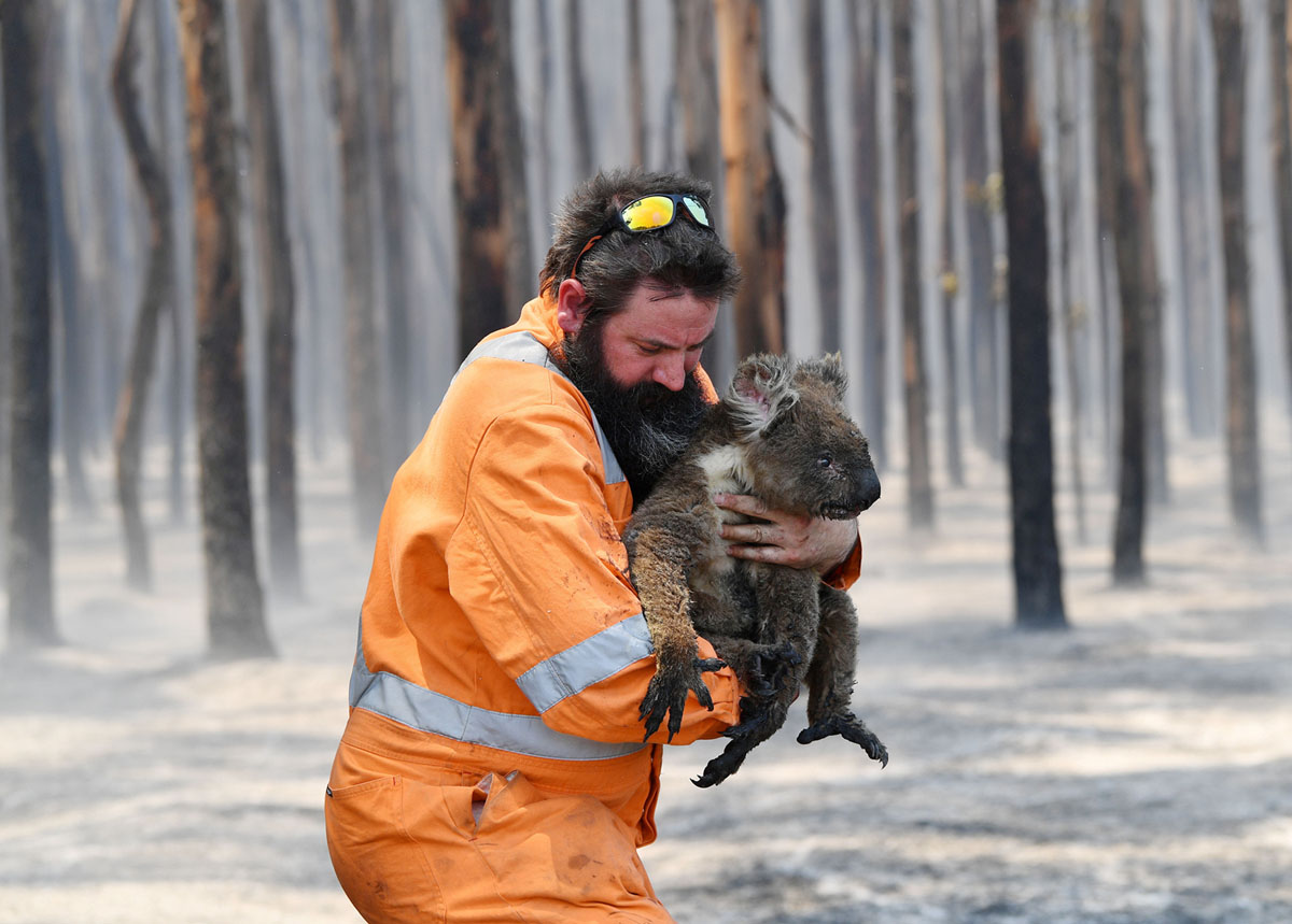 Animals Rescued From Australia's Bushfires (21 photos)