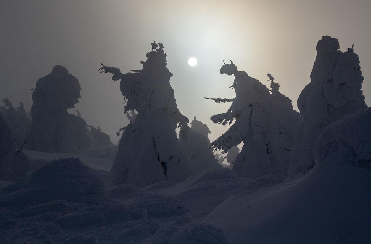 Juhyo: The Snow Monsters on Japan's Mount Zao (15 photos)