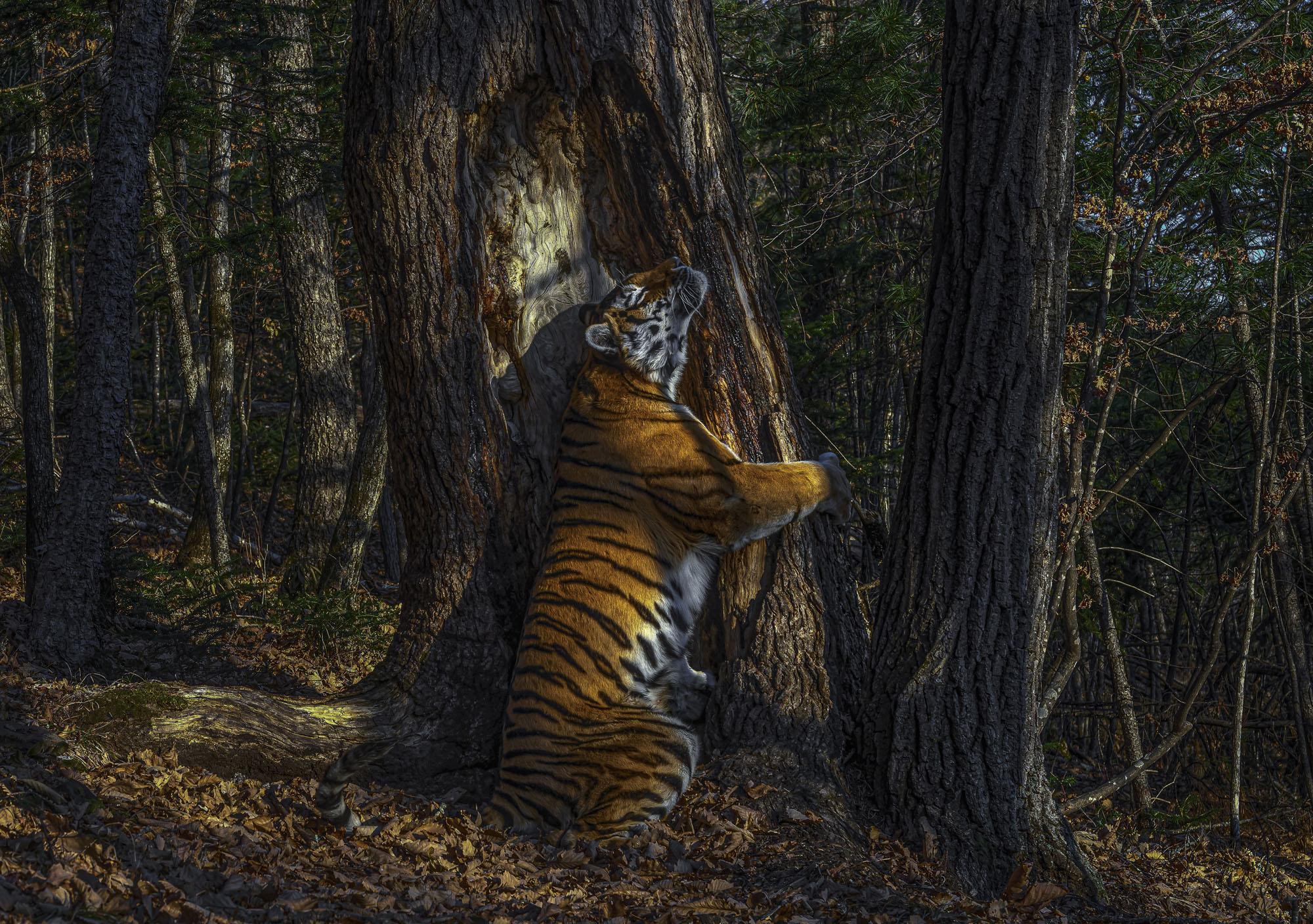 Aishwarya Sridhar wins the World Wildlife Photographer of the year award.