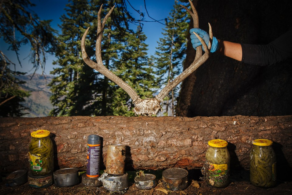 Illegal Pot Farms Are Poisoning California's Forests - The