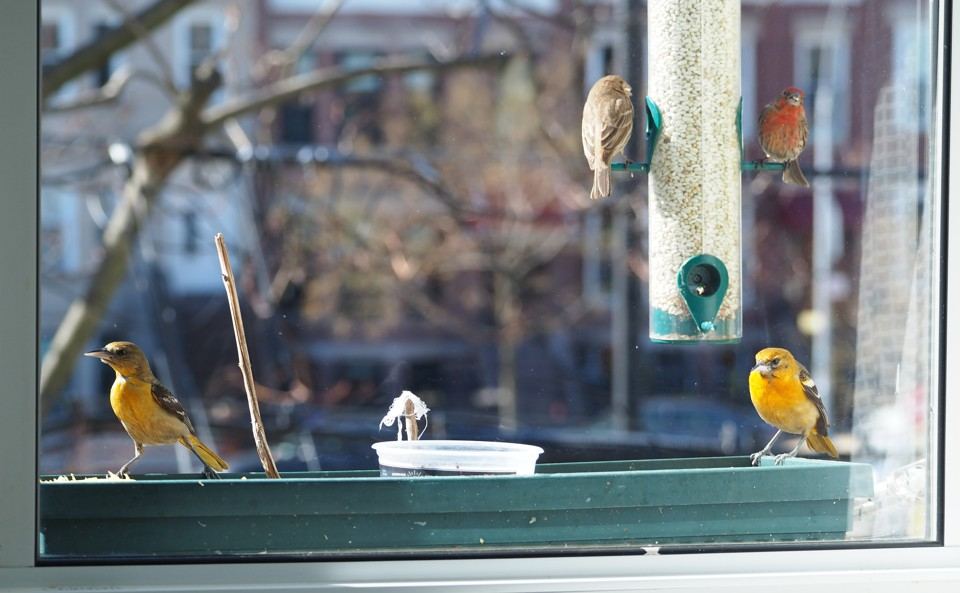 Urban Bird Feeders Are Changing the Course of Evolution - The Atlantic