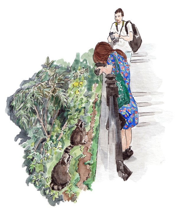 An illustration of a woman photographing raccoons at Mont-Royal Park
