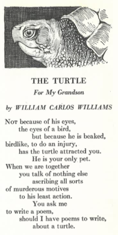 William Carlos Williams Poems The Turtle The Atlantic