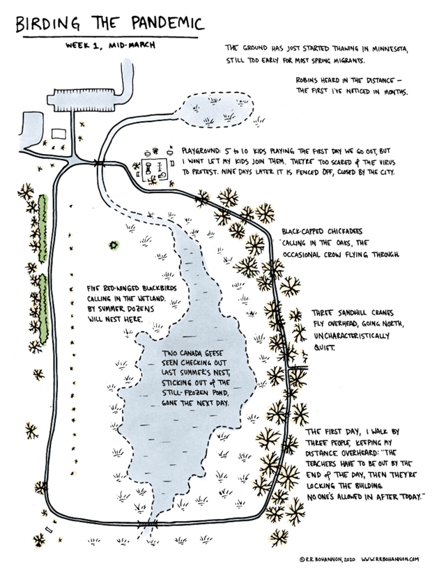 A map of the circular path around a lake in a local park, and the chicken coops, cranes, geese, blackbirds heard and saw there.