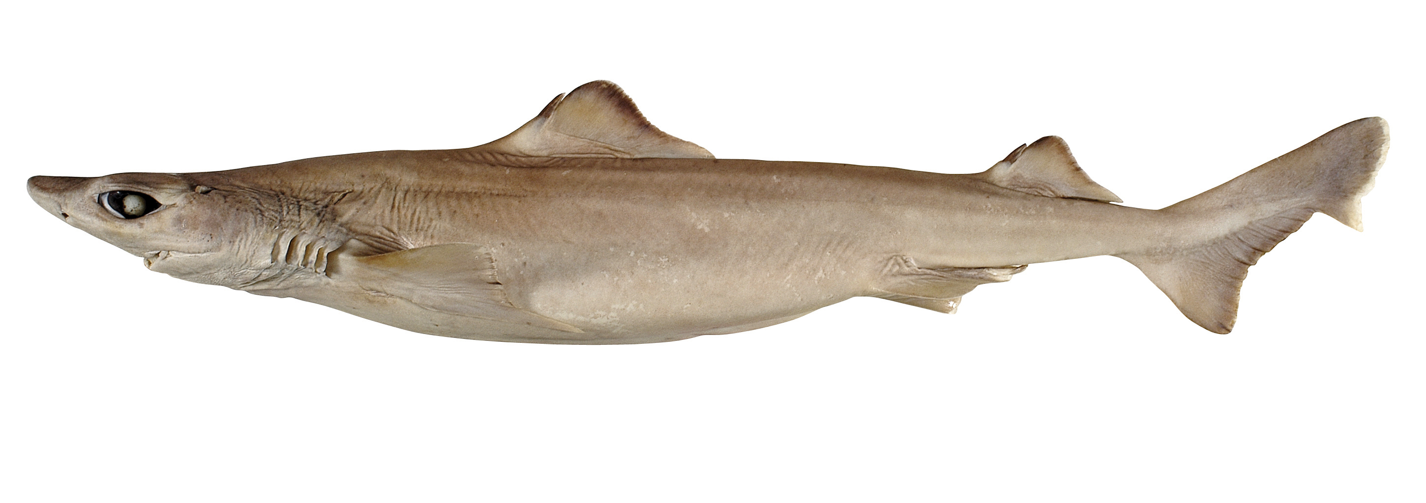 Want to help the environment eat weird delicious fish for Kinds of fish to eat
