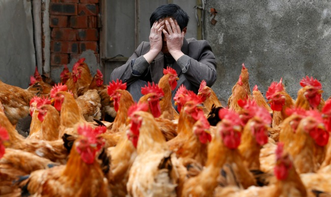 Image result for chicken images china