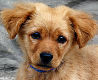 Study: Canine Compulsive Disorder Brings OCD Into Focus ...