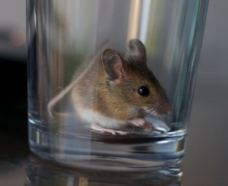 Study: Science Can Change the Sexual Orientations of Mice