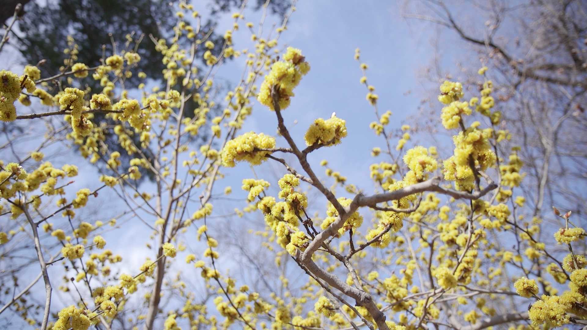 How Do Trees Know When It S Spring A Horticulturalist Explains