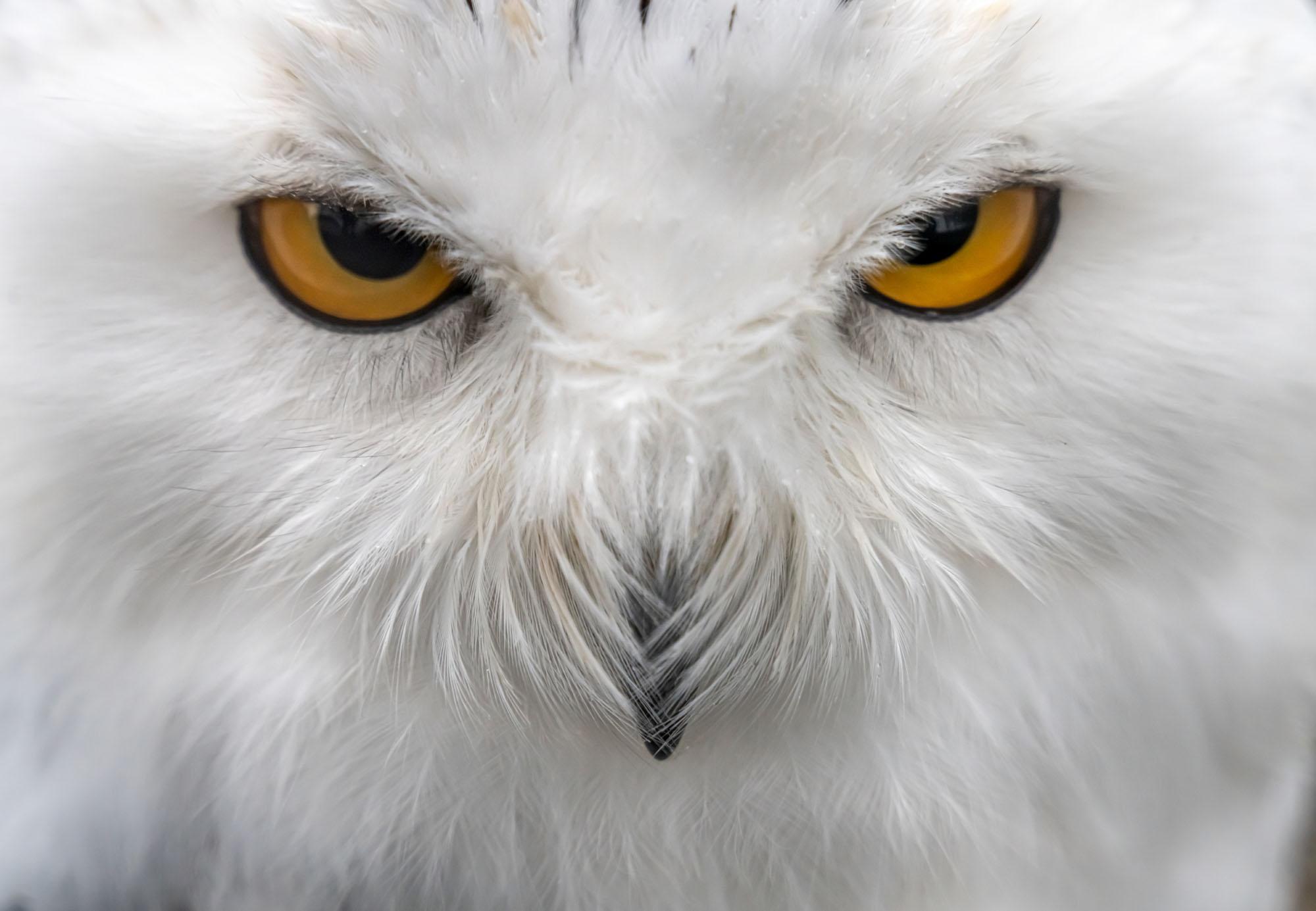 Photos: Superb Owl Sunday V - The Atlantic