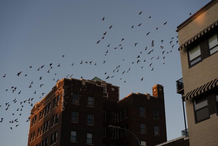 Birds fly past buildings in downtown Burlington.