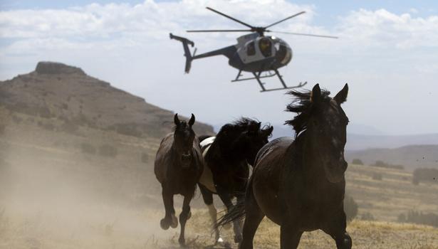 wildhorses-reuters-body.jpg