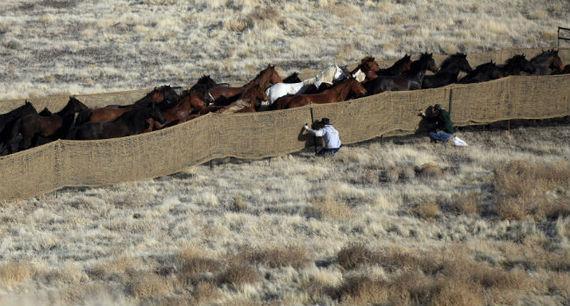 horsefban.jpg