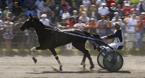 harness racing-body.jpg