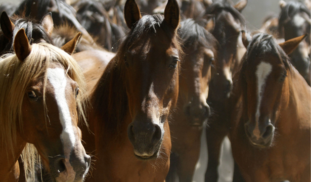 horseshorseshorses-body.jpg