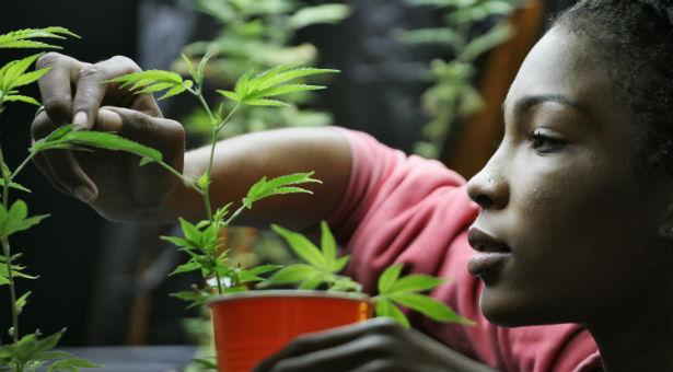 weedplantban.jpg