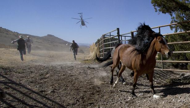 wild horse reuters- Jim Urquhart - Reuters-body.jpg