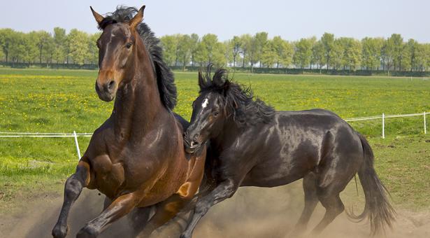 wild horses--cone_dmn-body.jpg