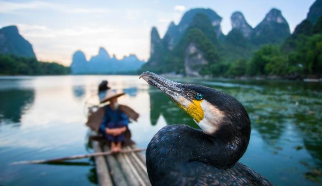 cormorantbanner.jpg