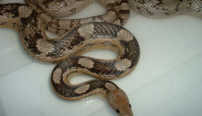 snakebanner.jpg