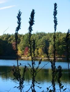 autumn tints grass 615.jpg