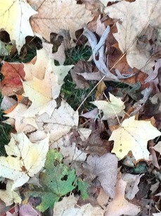 autumn tints ground 615.jpg