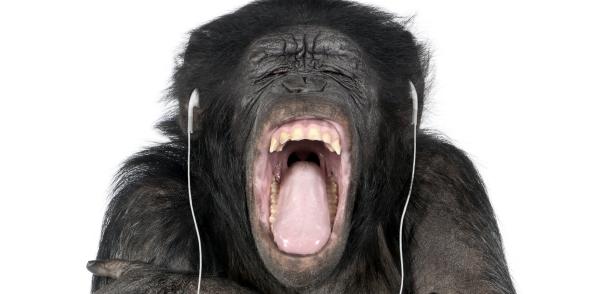 chimpanzee 615 music adaptation debate shutterstock.jpg