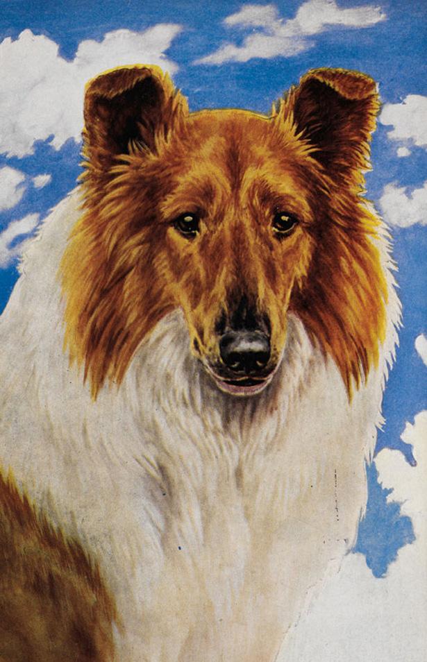 dogsinbooks10.jpg