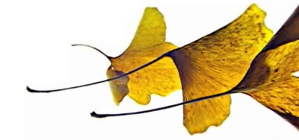 leaf and death 615.jpg