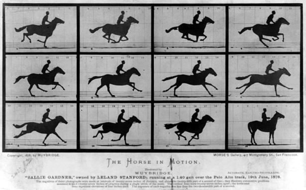murbridge horse in motion 6615 sheller.jpg